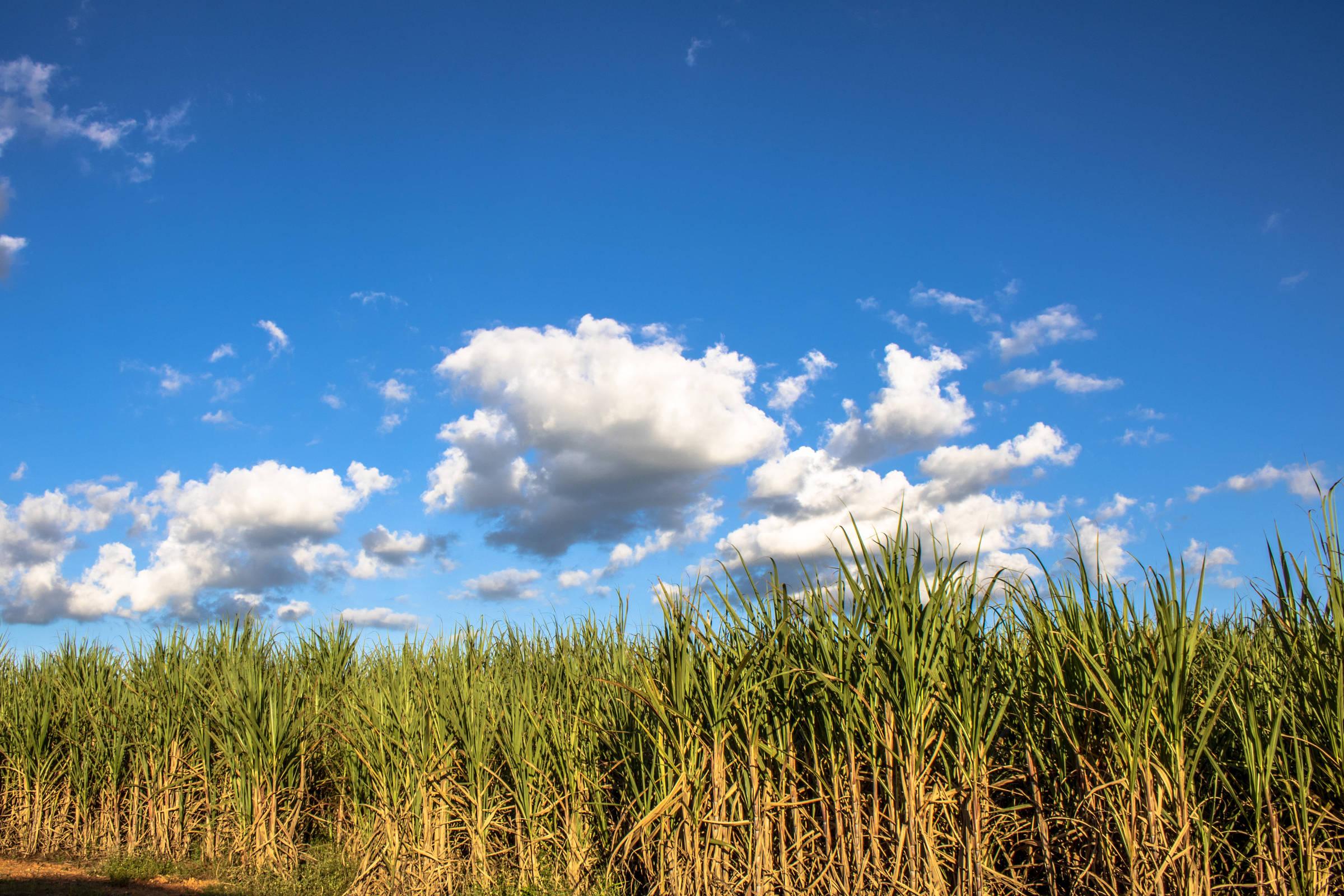 Ao escolher Trump, ele está pressionando o Brasil a aumentar a importação de etanol americano - 25 de junho de 2020. - mercado