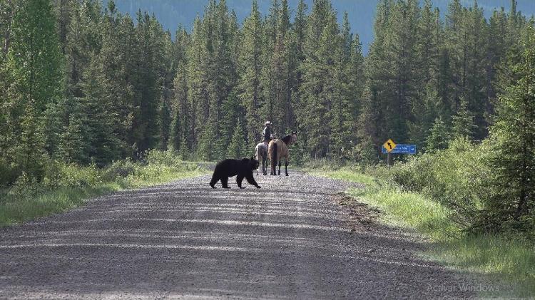 Filipe sendo perseguido por um urso na província do Canadá, Alberta - Arquivo pessoal - Arquivo pessoal