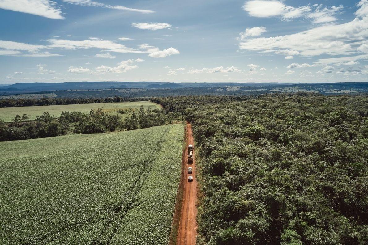 A caravana segue em direção ao santuário dos elefantes. Campos de soja, milho e algodão estendem-se no horizonte e se entrelaçam com áreas de vegetação indígena - Sofía López Mañán / Discovery