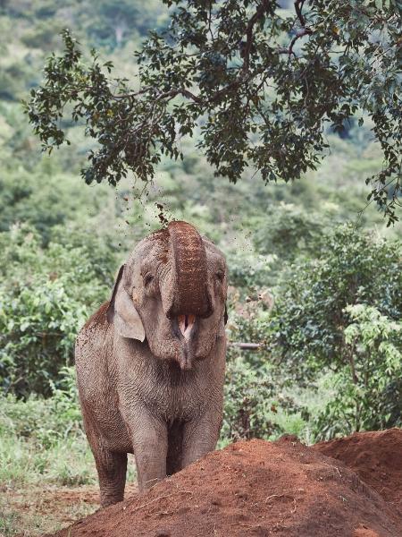 Os elefantes costumam jogar sujeira em si mesmos para matar parasitas ou se refrescar - Sofía López Mañán / Comunicado de imprensa - Sofía López Mañán / Comunicado de imprensa