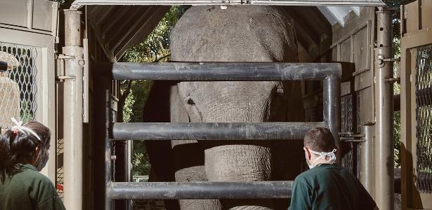 Elefanta viaja da Argentina para o Brasil, onde termina 50 anos de cativeiro - 12.12.2020
